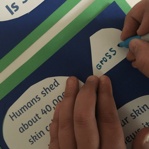 Human Body Unit Study: An Activity About Our Skin