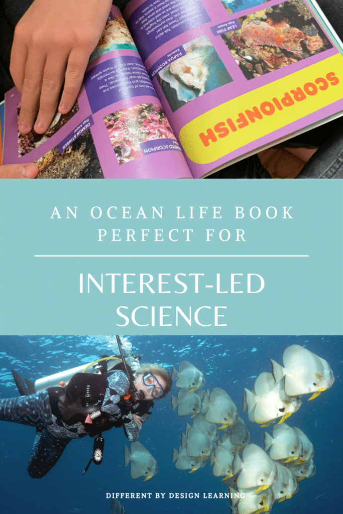 An Ocean Life Book Perfect For Interest Led Science
