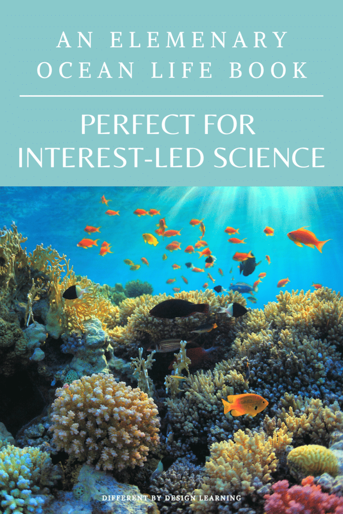 ocean life book perfect for interest-led science